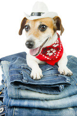 Cool dog advertises jeans