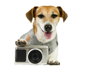 Jack Russell terrier photographer smiled