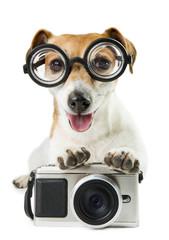 Cute dog Jack Russell terrier photographer