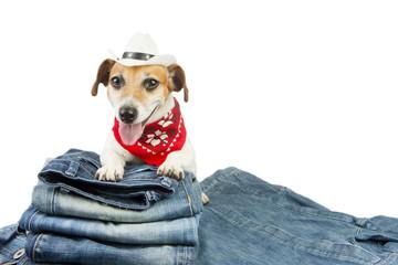 Trendy dog advertises coolest designer jeans