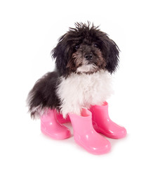 Kleiner Hund mit rosa Gummistiefeln