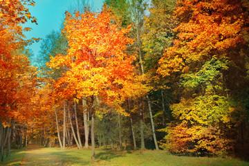 Autumn landscape © adisa