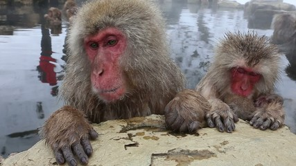 さるの親子  Snow Monkey in a hot spring