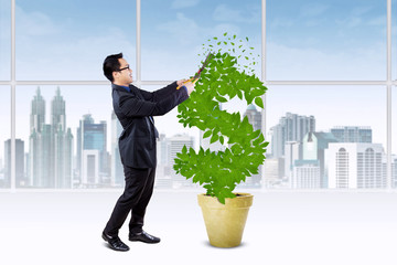 Person manage the growth of money tree