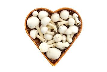 Raw white wild mushrooms champignons Agaricus in basket isolated