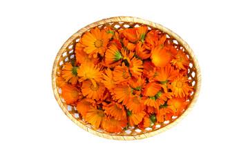 basket with calendula marigold medical flowers isolated on white