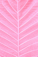Texture of a pink leaf as background