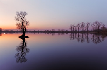 Lake with tree at sunrise, Slovakia