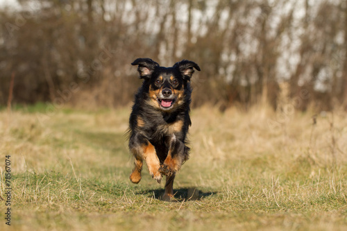 canvas print picture Rennender Hund