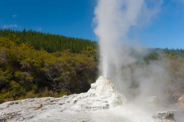 Ledy Knox geyser