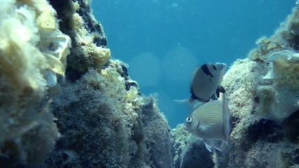 Reef at the bottom of the blue sea - Underwater footage HD 1080p