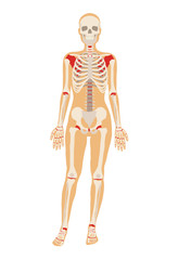 Woman skeleton. Vector flat illustration