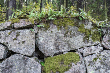 Old stone wall covered by moss and vegetation, Viborg, Russia