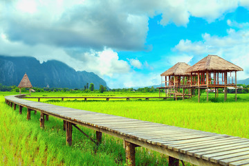 Cottage in the middle of rice fields at Vang Vieng, Loas