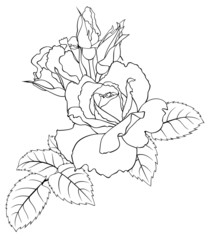 Outline drawing of roses