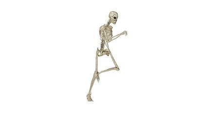 Skeleton running morphing into Human, loop, white