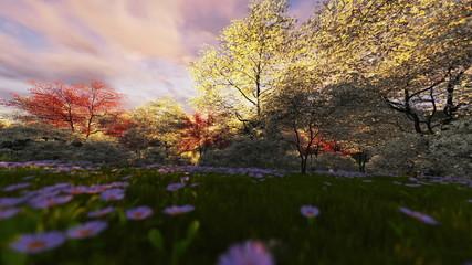 Spring forest, timelapse sunrise, camera fly