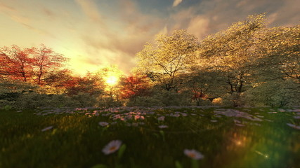Spring scenery at sunset, camera panning