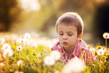 Cute little boy in a dandelion field, having fun