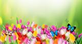 Fototapety Beautiful bouquet of tulips.