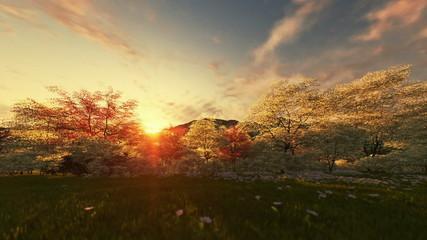 Spring scenery, timelapse sunrise