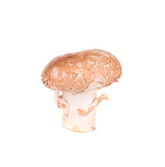 Champignon mushroom.