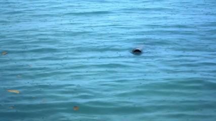 Rain drops falling on sea surface nice blue color. Video