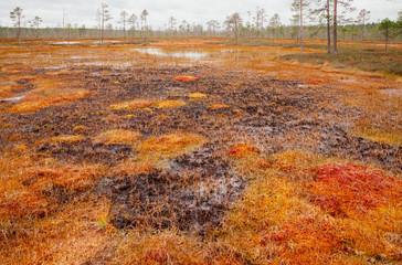 Moor in Finnland