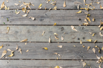 yellow leaf on deck