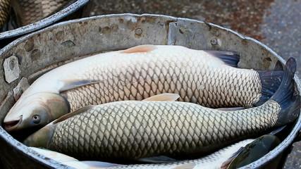 Fresh fish ready for market