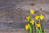 Fototapeta daffodils on wooden background