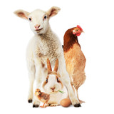 Lamb, rabbit, hen, chick and egg