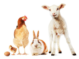 Lamb, rabbit, hen, chick and egg