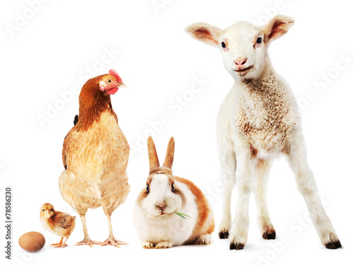 Foto op Plexiglas Schapen Lamb, rabbit, hen, chick and egg