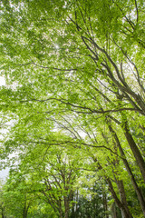 新緑の樹木
