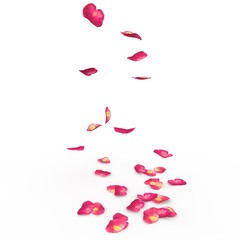 Petals of roses fall on a floor