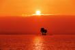 Leinwanddruck Bild - Sonnenuntergang mit Palmen