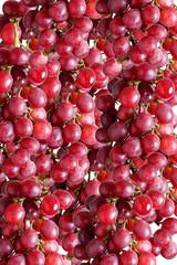 Se di grappoli di uva, insieme di uva, cassetta di uva