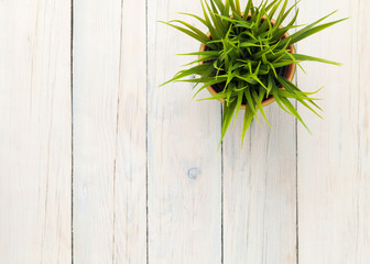 Potted grass flower over wooden table background