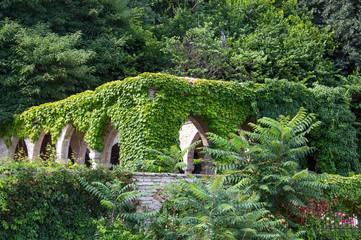 The old gazebo with arches covered with ivy in the garden