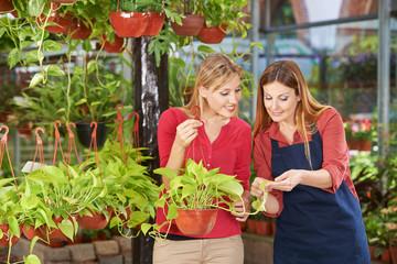 Kompetente Beratung im Gartencenter
