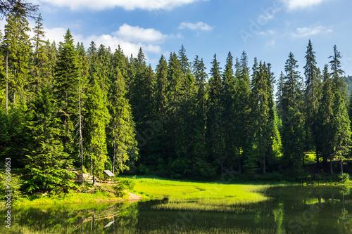 Leinwanddruck Bild bower on the lake in forest