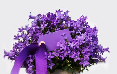 Blumen mit Schild und Textfreiraum