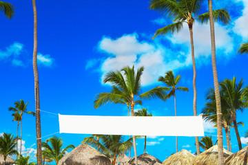 Coconut trees on a coast