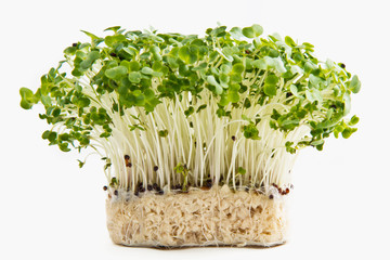 Cress with roots isolated on white background