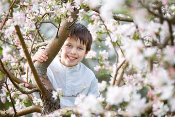 Cute little boy in blooming apple garden