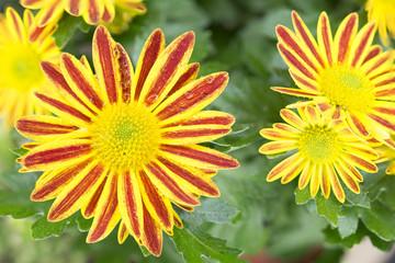 Flor amarilla y roja