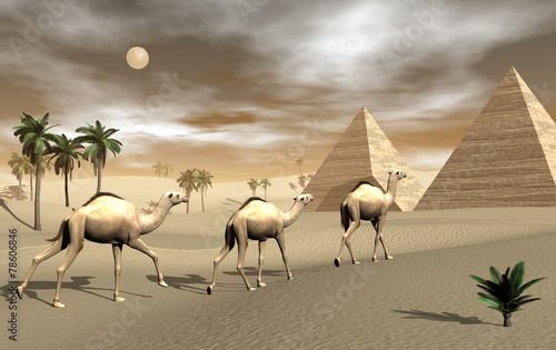 Naklejka Camels and pyramids - 3D render