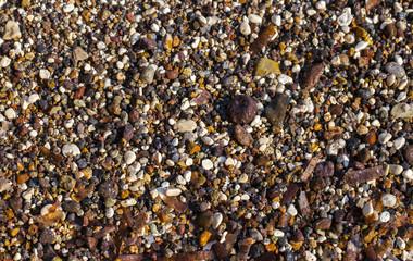 Dry Sea Moss