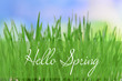 Beautiful spring grass